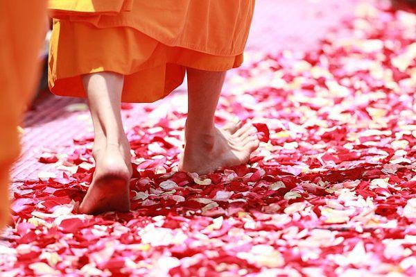 バラの花びらの上を歩く修行僧