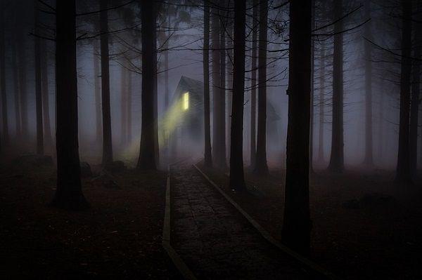 おとぎ話のような森