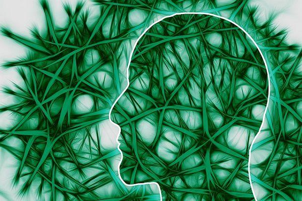 脳内の神経回路