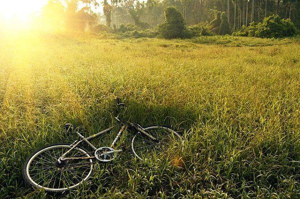 草むらの自転車