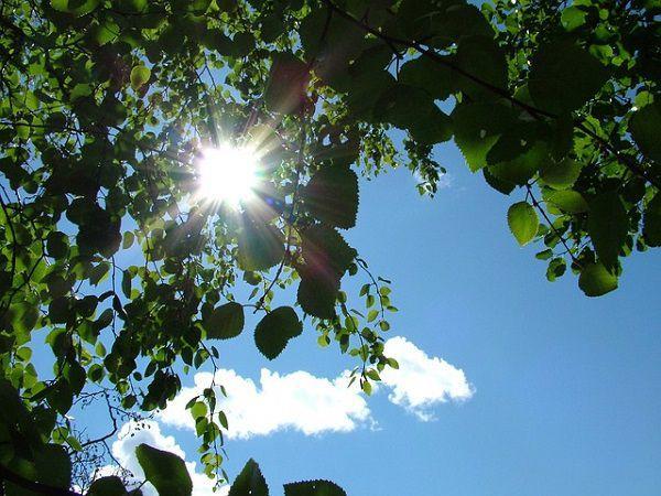 木の隙間から差し込む太陽