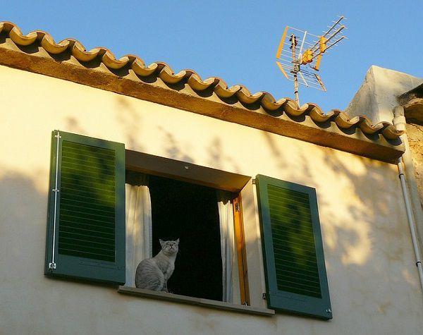 窓から見下ろすネコ