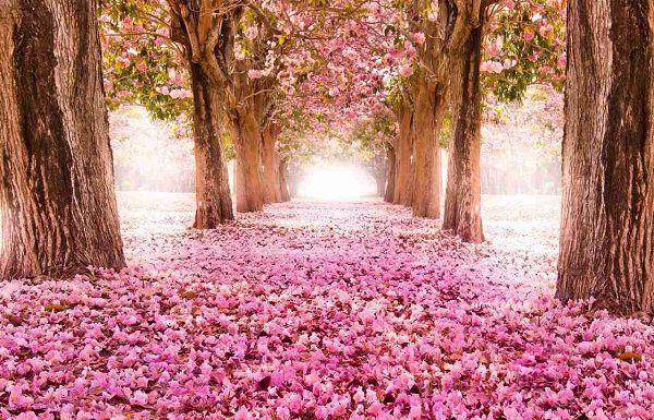 花で埋め尽くされた道