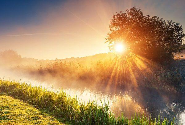 木の影から差し込む希望の光