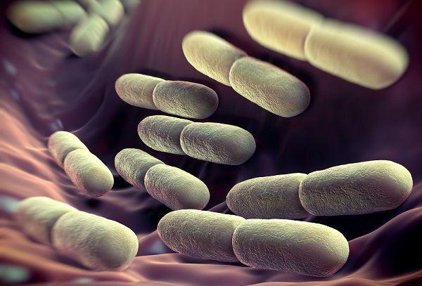 腸まで届く乳酸菌