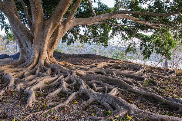 根を深く張れ