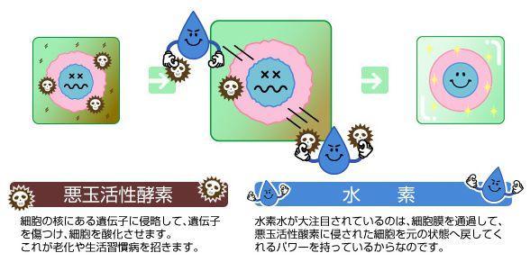 水素水のアンチエイジング効果
