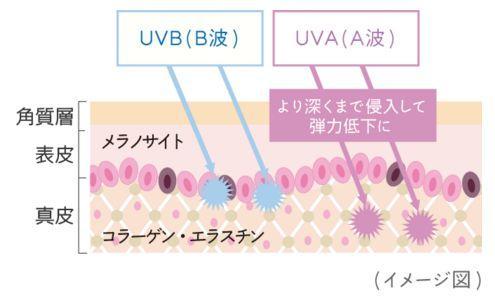 UVAとUVB