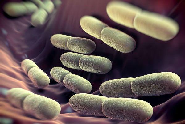 乳酸菌配合