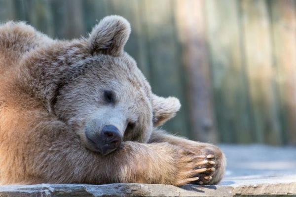 冬眠する動物